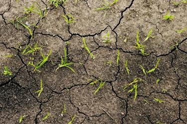 خاک بدون مواد ارگانیک و اسید هیومیک