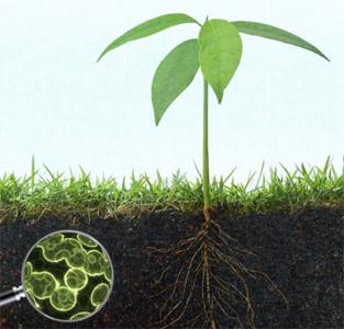 اسید هیومیک در خاک